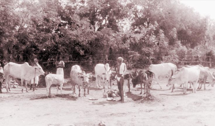 Ramana Lakshmi 12