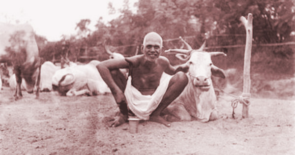 Ramana Lakshmi 13