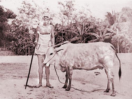 Ramana Lakshmi 5