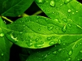 wallpapers-rain-refresh-and-stock-p-os-1920x1080.jpg