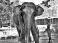 Arunachaleswarar Temple Elephant