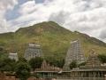 Arunachala Hill 16
