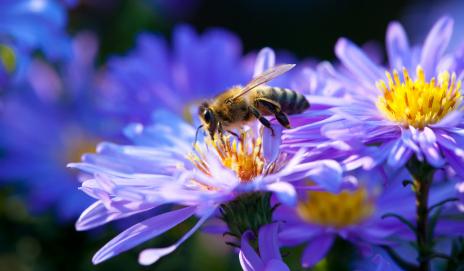 O Humming Bee