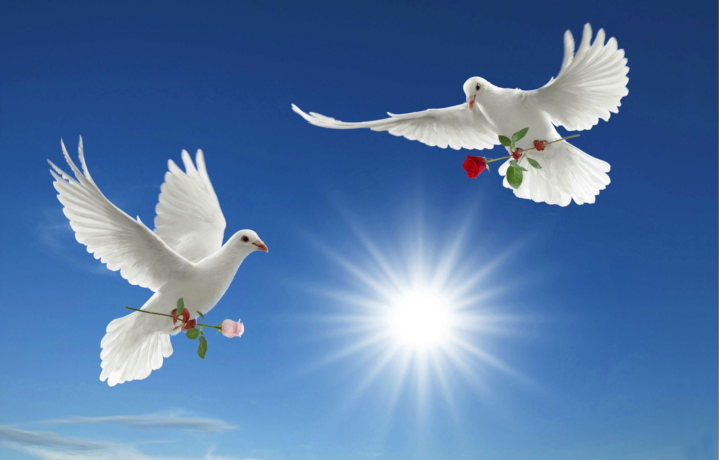 Открытка птица в небесах