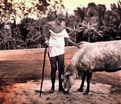 Ramana Maharshi and Cow Lakshmi